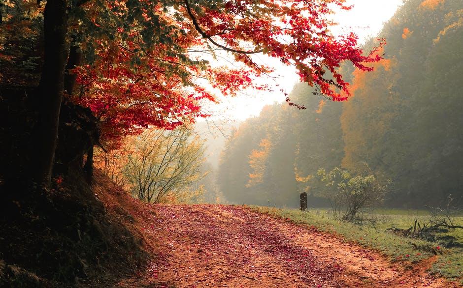Blog photo autumn pexels-photo-589841
