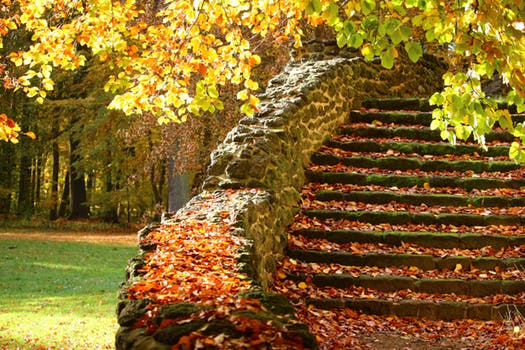 blog photo leafy stairs pexels-photo-268974
